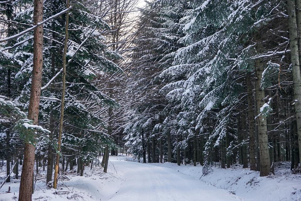 bosco innevato escursione montagna