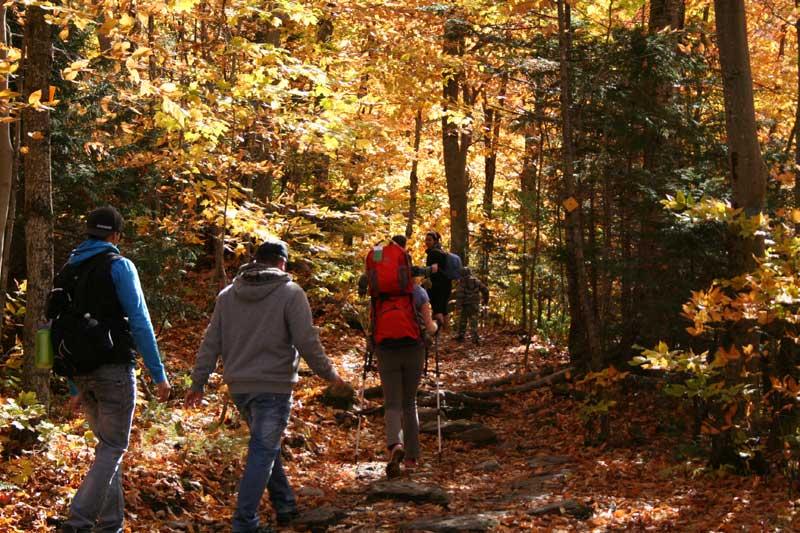trekking autunno val gardena bosco raccolta funghi