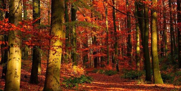 autunno bosco val gardena